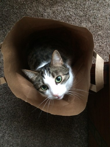 You're done with this bag, right?