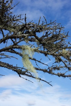 Blue sky and lichens