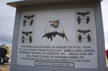 Eagle Watch 2017 Sheffield Mills