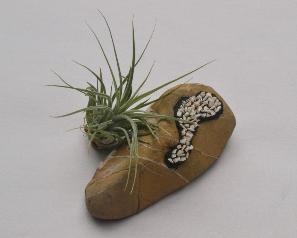 Julie Sperling - pet rock with air plant