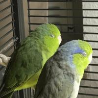 UV-Beleuchtung für Vögel