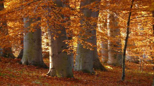 HTG-Herbst-Wald-7-1920