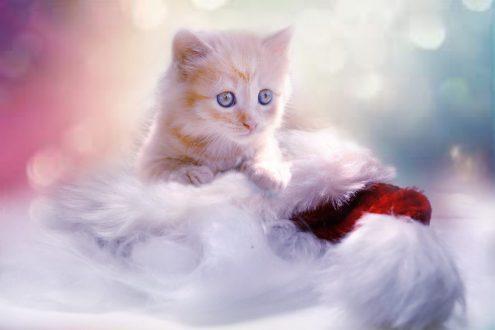 HTG Slider Winter Katze Weihnachten