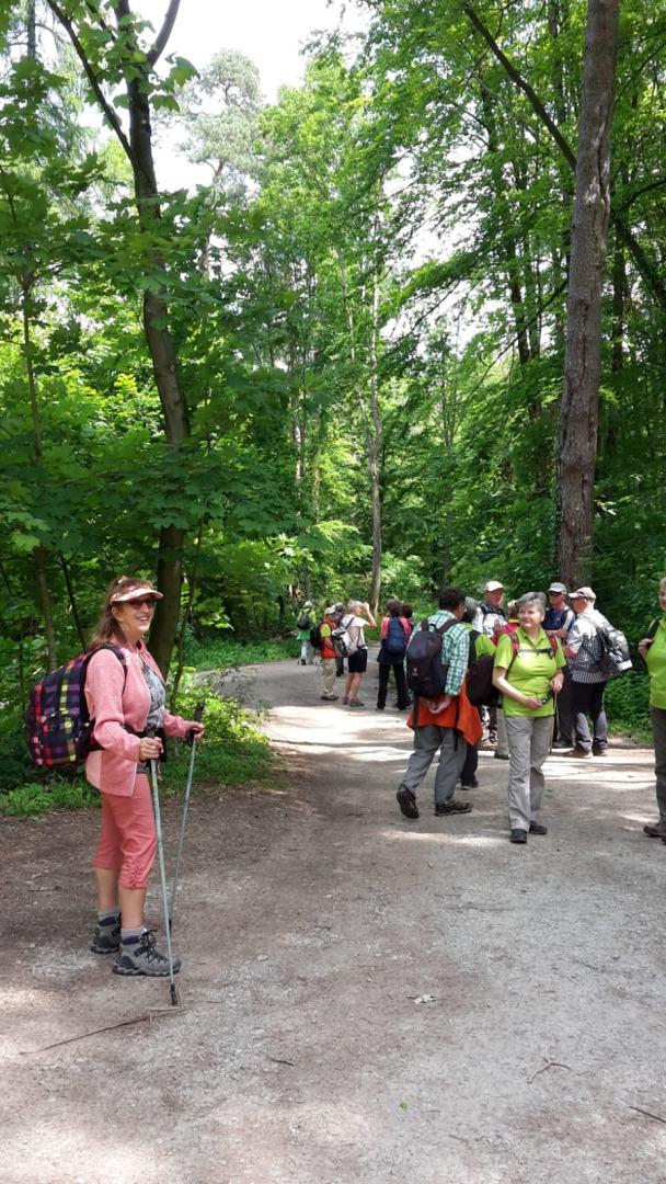 20190526-Birkenhainer Strasse Im Wald