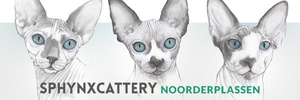 Sphynx cattery van de Noorderplassen