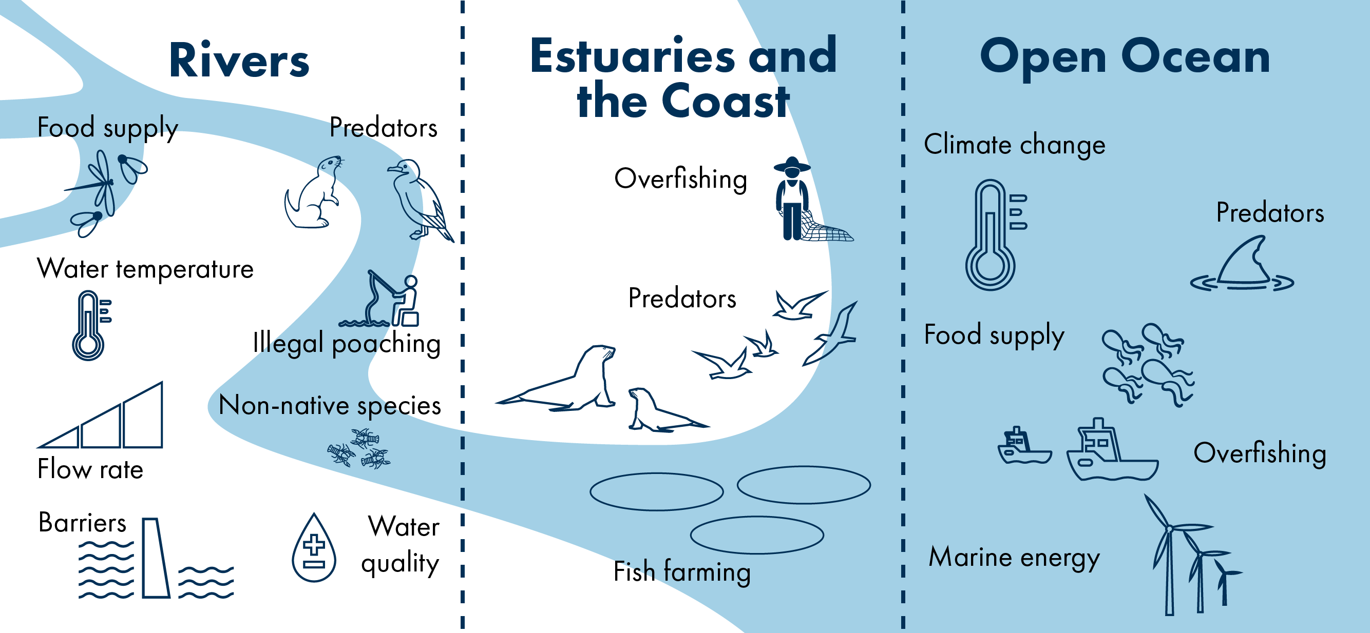 A graphic depicting threats to salmon in rivers, estuaries and the coast plus the open ocean