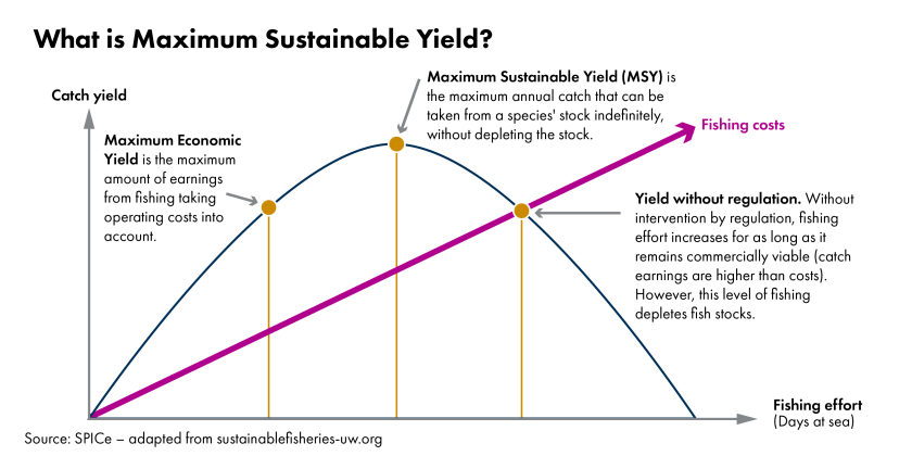 Char showing a conceptual graph of Maximum Sustainable Yield. On the X axis is fishing effort. The Y axis is catch yield. The chart shows a bell curve with a linear line indicating fishing costs. There are 3 points marked on the curve. The first indicates maximum economic yield. This is the maximum amount of earnings from fishing, taking operating costs into account. The second point is at the peak of the curve. This is maximum sustainable yield which is the maximum annual catch that can be taken from a species' stock indefinitely without depleting the stock. The final point intersects the fisheries cost line. This is yield without regulation. Without intervention by regulation, fishing effort increases for as long as it remains commercially viable (catch earnings are higher than costs). However, this level of fishing depletes fish stocks.
