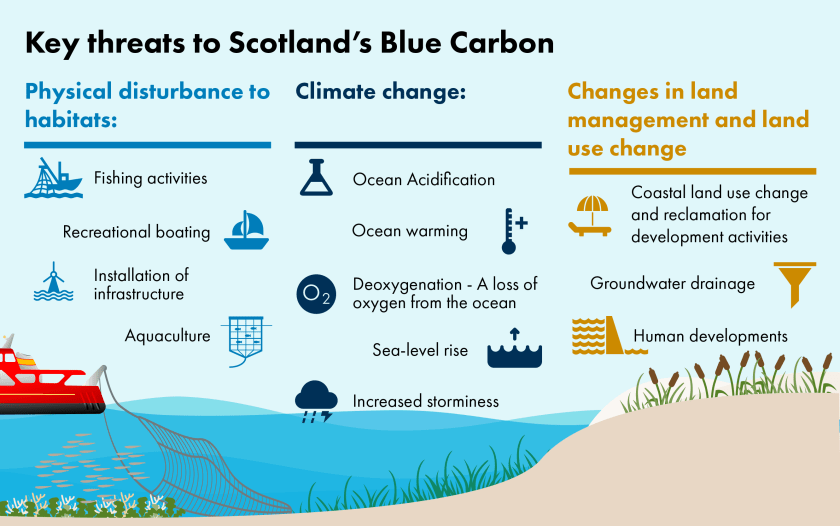 Infographic image showing the key threats to Scotland's blue carbon, categorised into physical disturbance, climate change and changes in land management and land-use change.
