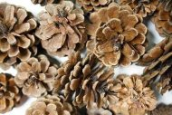 Bulk Package of Natural Pinecones-1/2 Pound