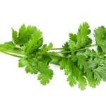fresh -coriander leaves-image buy indian spice online spiceitupp