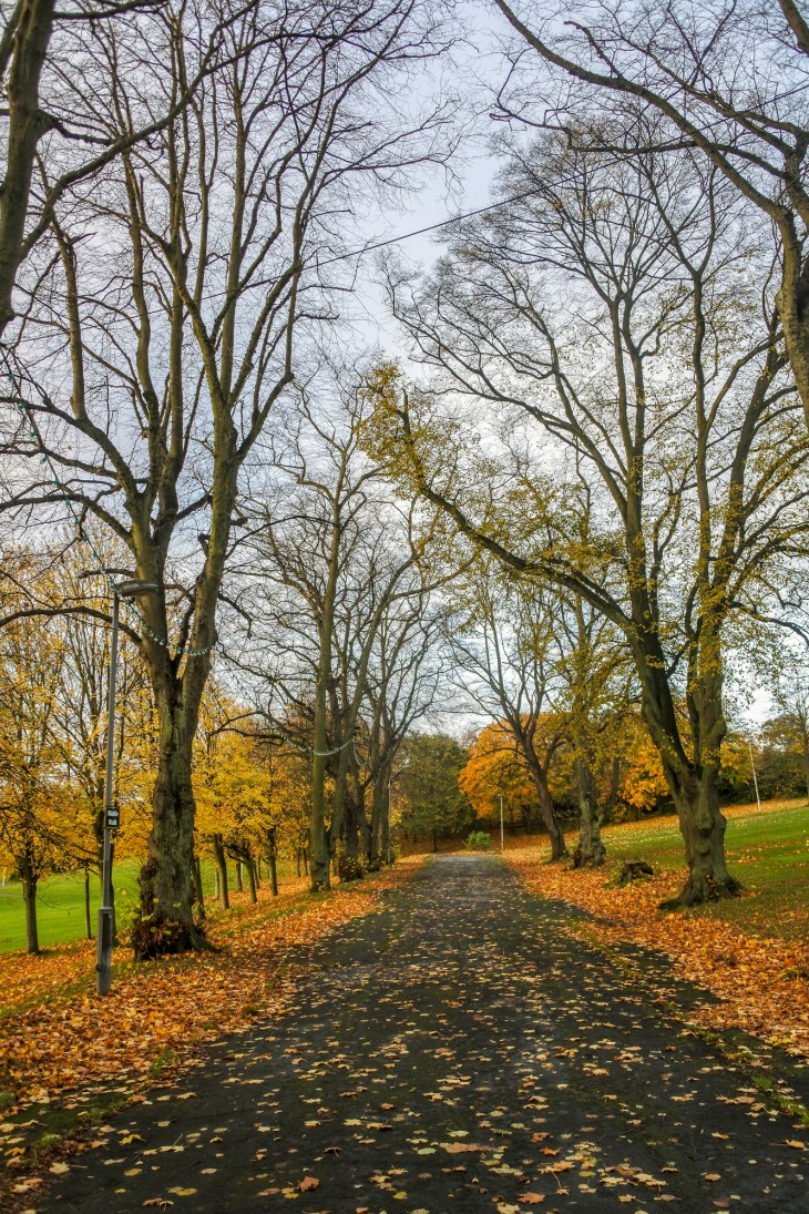 a park lane lined with trees and Autumn leaves