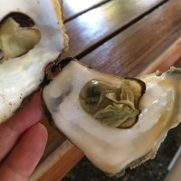 Oysters For Sunday Brunch