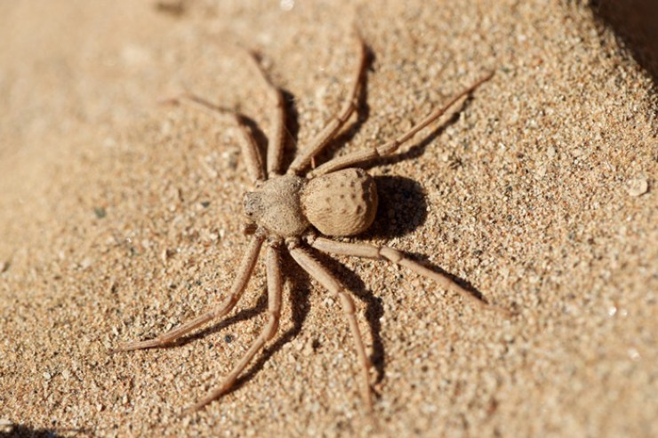 creepiest spiders to ever exist
