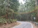 नैनीताल : सरीसृप जीवों को सड़क दुर्घटना से बचाने के लिए तैयार किया 70 मीटर लंबा इको ब्रिज