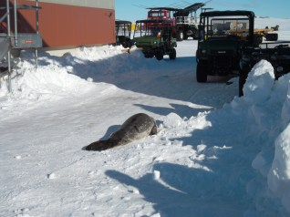 Seal heads across LDB.