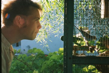 man looking at budgies in a cage