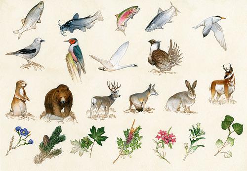 Discoveries Brettspiel Tiere und Pflanzen