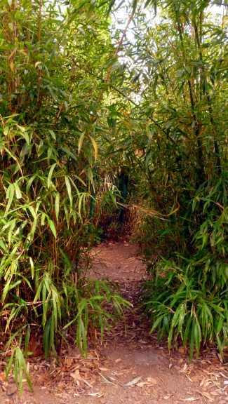 Eingang zum Bambuslabyrinth