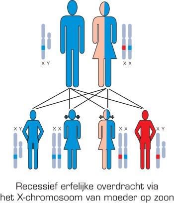 Duchenne-SCHEMA Duchenne spierdystrofie (DMD)