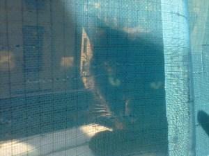 Emma in window