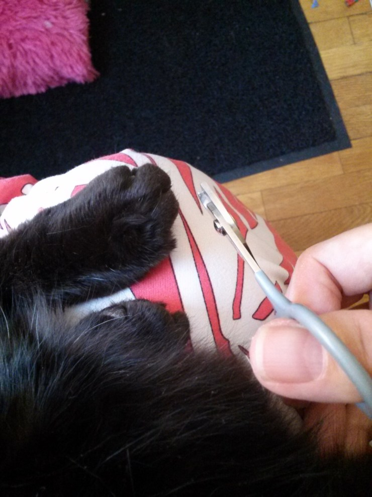 Claw trimmer and cat's claw