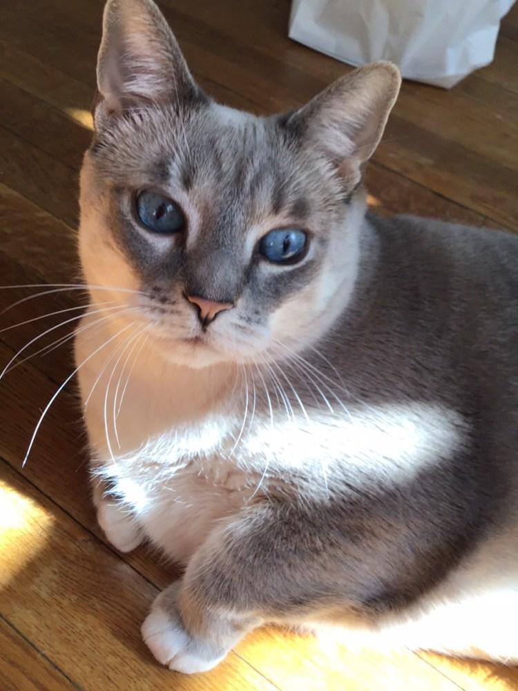 My beautiful Lilly cat.