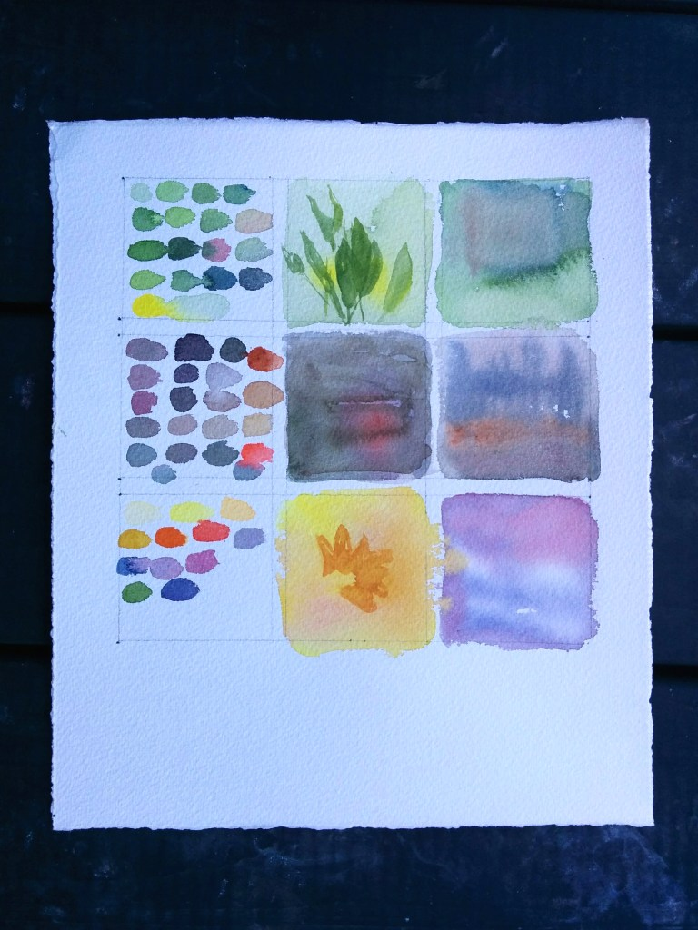 color studies: leaves, soil/bark, flowers
