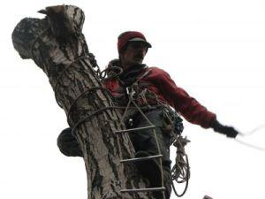 спил дерева Хмельницкий