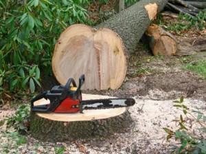 Спилить дерево Хмельницкий