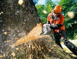 Видалення дерев Хмельницкий