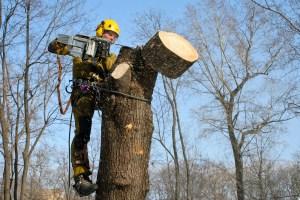 розчистка дерева Хмельницький