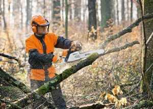 Зрізати дерево Хмельницький