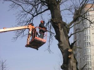 Обрезать дерево Хмельницкий