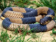 colored snake wallpaper
