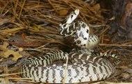 snake2g