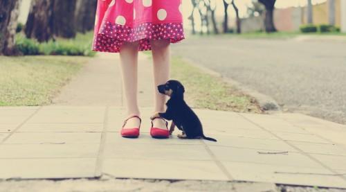 The Polka Dot Dress