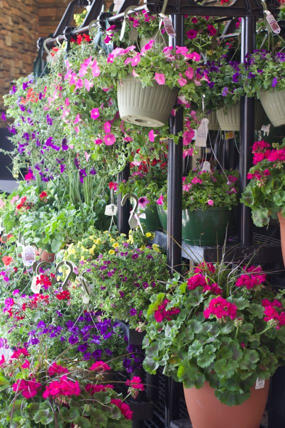 Flowers at Kroger Marketplace by Angela Roberts