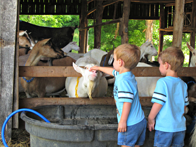 Noble Springs Dairy, Family Fun in Nashville