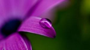 purple-flower-drop