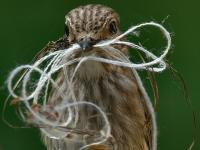 knitter's knesting instinct