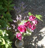 Lanai roses