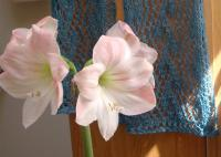 Apple Blossom amaryllis and Concert Scarf in baby alpaca