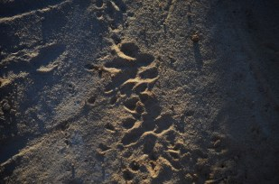 Tracks and traces