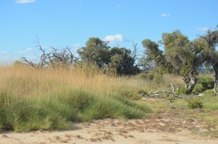 09_Green spinifex