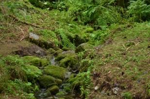 06_mossy_spring