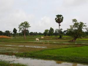 Siem Reap to Beng Mealea