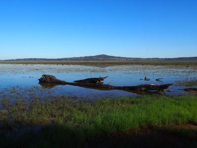 Winton Wetlands