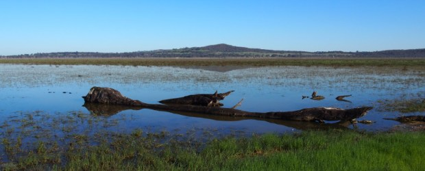Winton Wetlands – Adding Water
