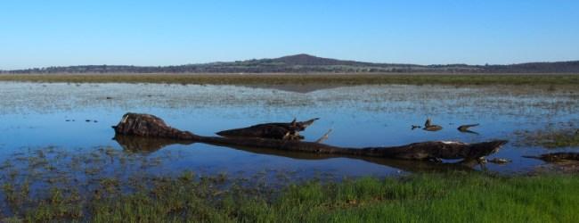Winton Wetlands – Adding Water