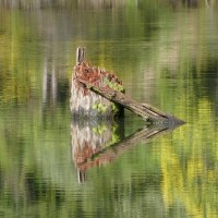 On the Monet. Nature reflecting art?